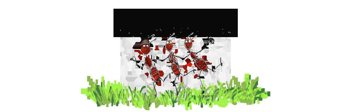 Les fourmis fouineuses - Köln und Umgebung
