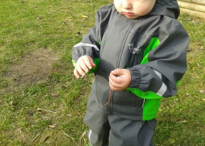 Die Regenwürmer –  Les vers de terre